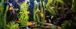 Aquarium-S-F-Shutterstock.com