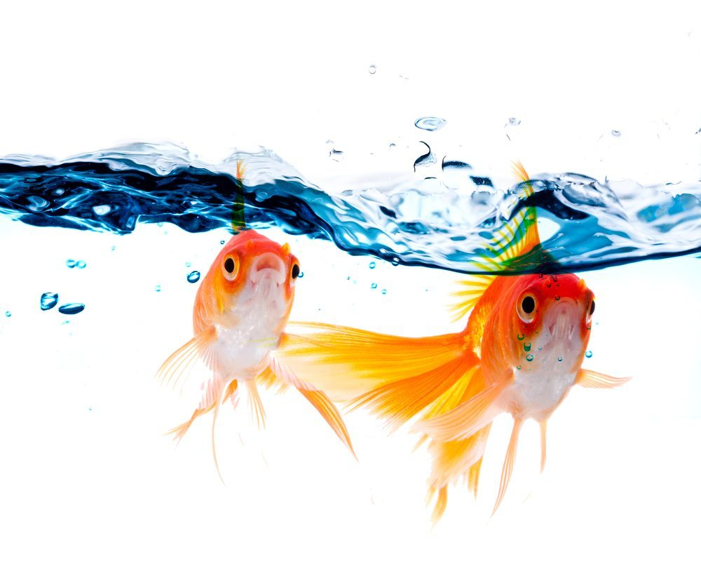 Transport von Fischen und Pflanzen extra durchführen. (Bild: zzz / Shutterstock.com)