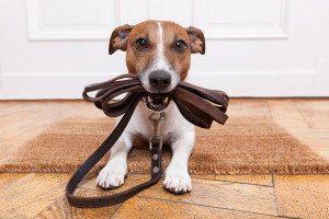 Haustiere-Javier Brosch-Shutterstock.com