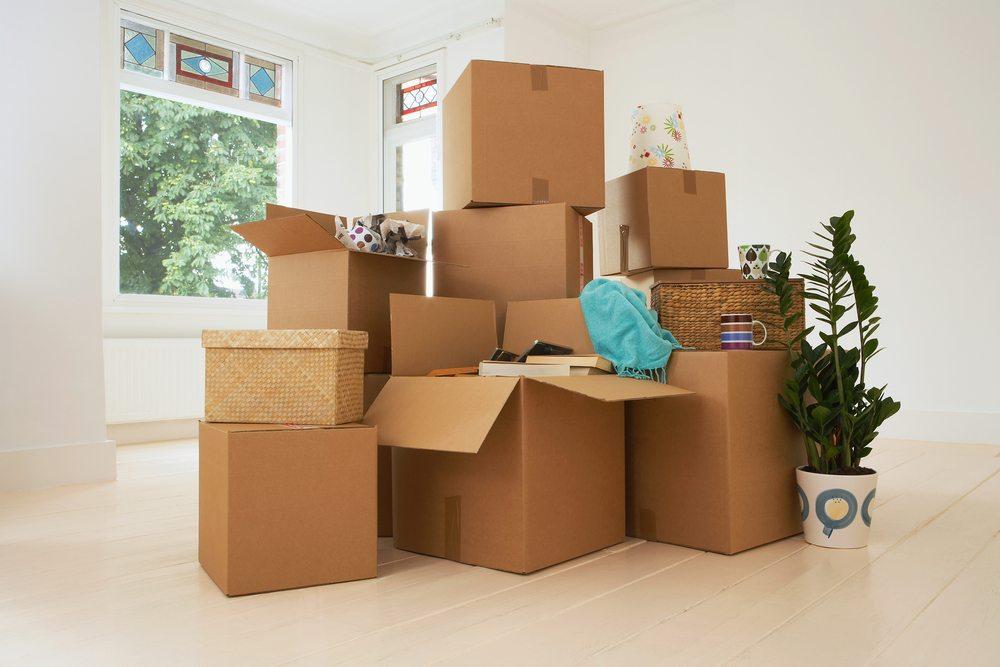 Grosse Pflanzen richtig verpacken. (Bild: bikeriderlondon / Shutterstock.com)