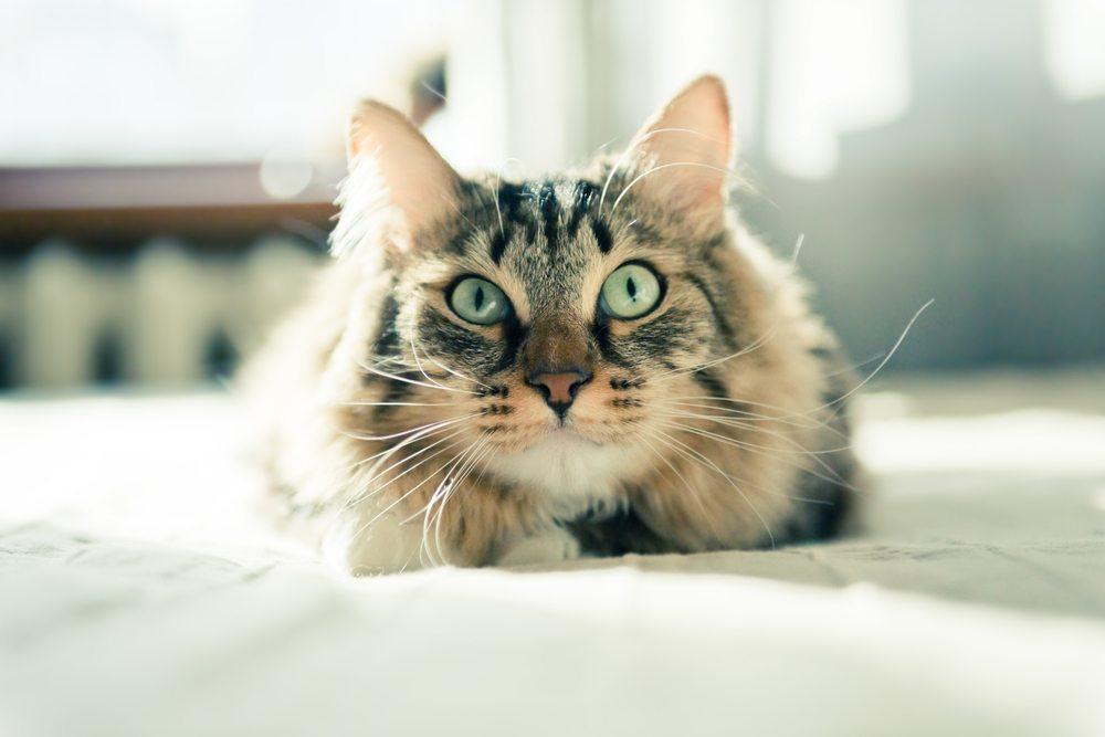 Hunde- und Katzenhaare sind mitunter ein echtes Ärgernis. (Bild: Valeri Potapova / Shutterstock.com)