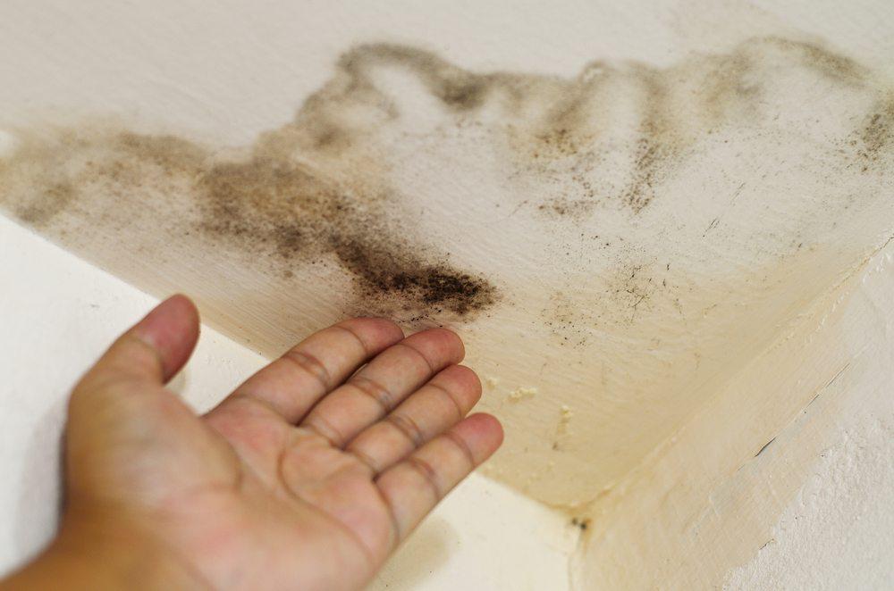 pilzbefall festgestellt beseitigen sie schimmel nach ihrem umzug effizient. Black Bedroom Furniture Sets. Home Design Ideas