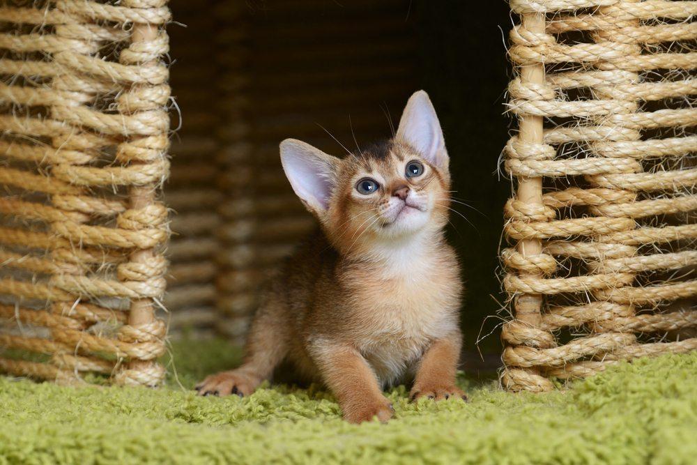 Haustiere wollen sich in ihrem neuen Zuhause rundum gut fühlen. (Bild: nelik / Shutterstock.com)