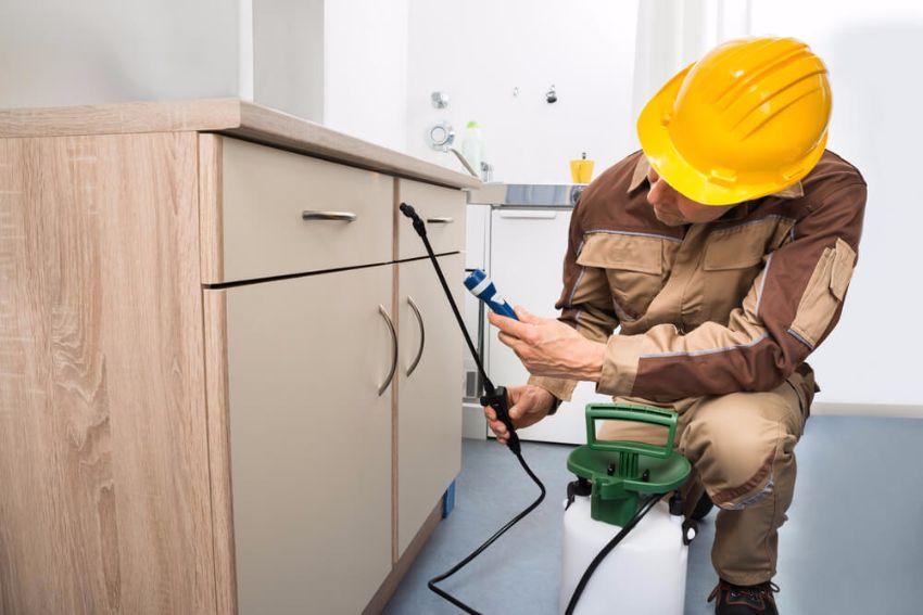 Ist der massive Schädlingsbefall eindeutig, muss der Vermieter schnell für Abhilfe sorgen. (Bild: © Andrey Popov - shutterstock.com)