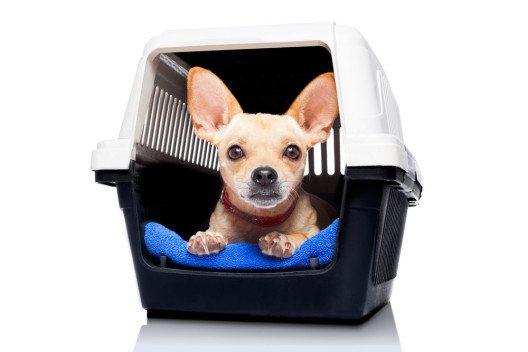Tiere nehmen eine Umzugssituation generell sehr sensibel wahr. (Bild: Javier Brosch – Shutterstock.com)