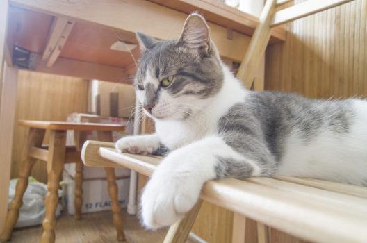 Machen Sie Ihre neue Wohnung auch für Ihre Katze zum kleinen Paradies! (Bild: Andrey Kolosay - shutterstock.com)