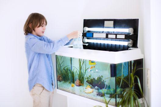 Ein Aquarium macht auch Kindern viel Freude. (Bild: FamVeld - shutterstock.com)