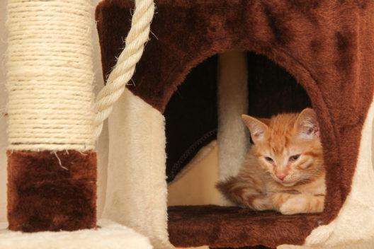 Auch die Katze soll sich in der neuen Wohnung wohlfühlen. (Bild: OFC Pictures - shutterstock.com)